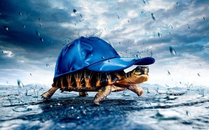 Скорпион и черепаха